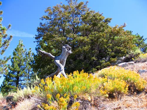 Pacific Crest Trail to  Pacifico Mtn.