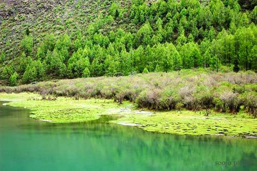 DaHaiZhi Gully - Spring
