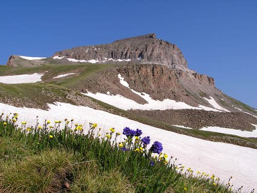 Uncompahgre with Wildflowers