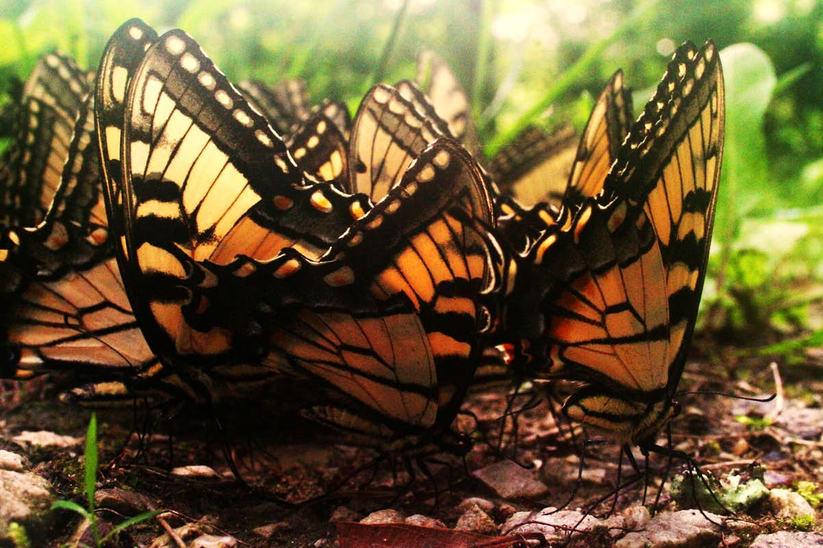 butterfly cluster photos diagrams u0026 topos summitpost