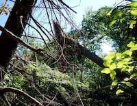 Green Mtn., NH - tornado damage