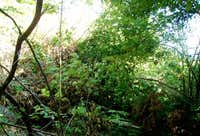 Green Mtn - Libby Trail