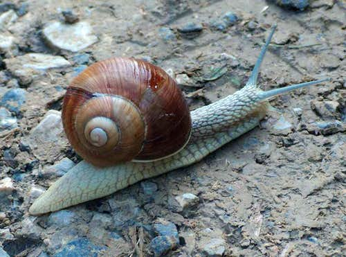 Snail in the Beskides