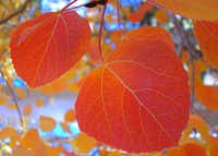 Early Fall in the Eastern Sierra