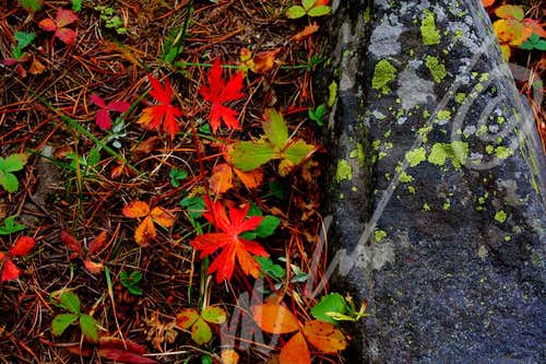 Fall colors and Lichen