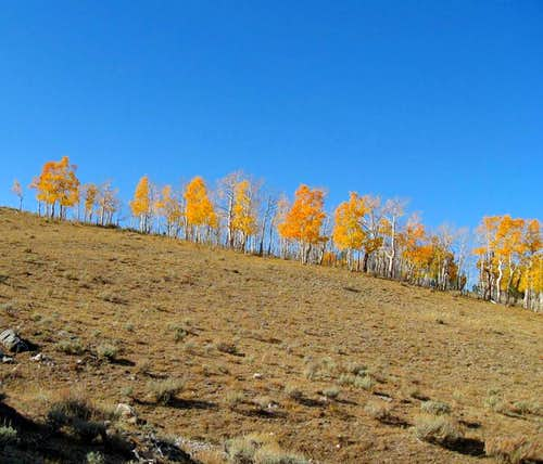 Fall color at 10,000 feet