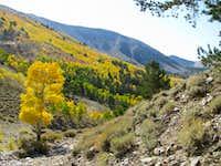 Brilliant colors at Timber Creek