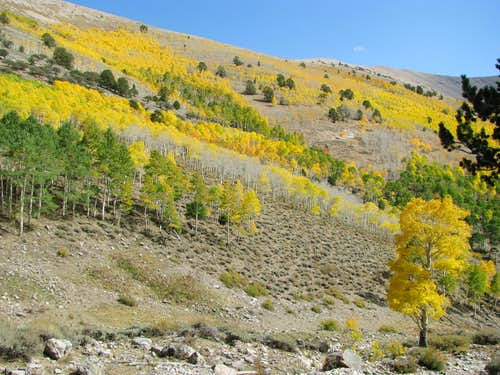 Aspens dot the slopes of North Schell