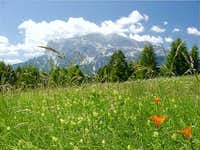 A beautiful meadow on Passo...