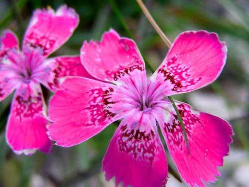 the flower 3