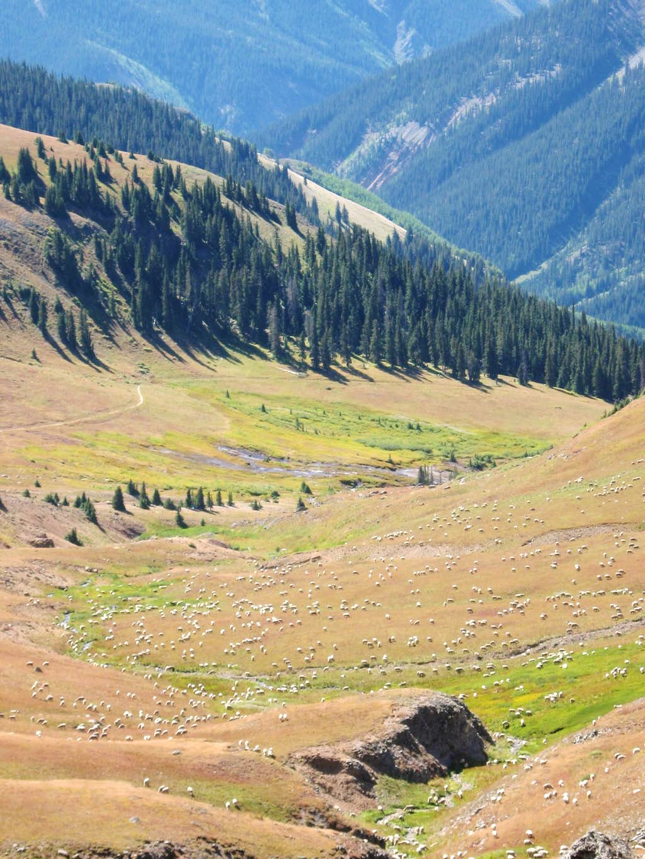 Sheep in Alpine Valley 12,000'(Wetterhorn)