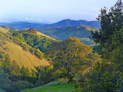 "Mt. Tam from ""Oak Tree Peak"""