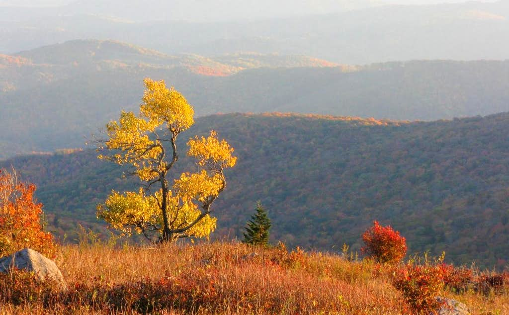 Fall on Mt. Rogers