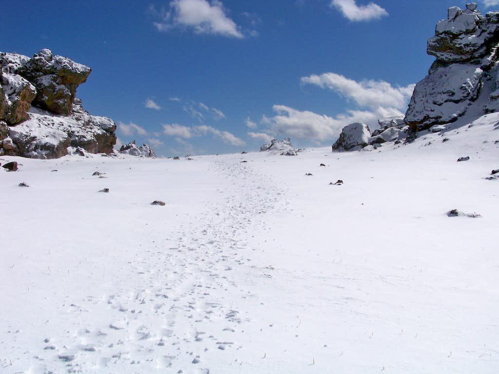 Hoof Tracks on North Tarryall Peak Summit Plateau