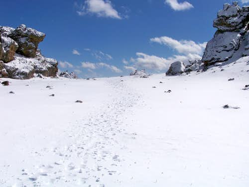 Hoof Tracks on North Tarryall Peak Summit Plateau