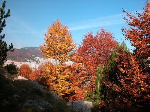 Fall on Prenj