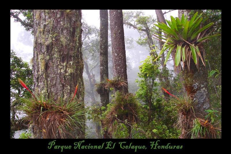 Plants in Celaque, Honduras