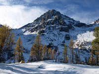 Black Peak Larch Trees