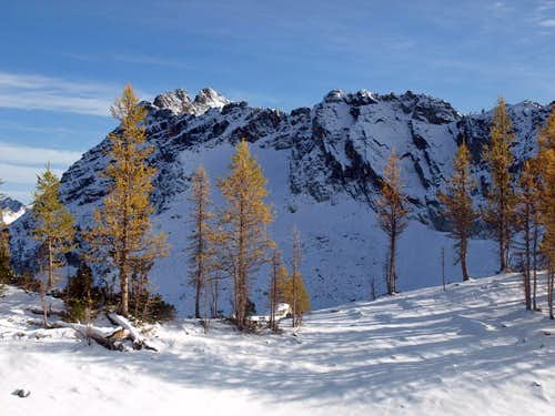 Larch Trees at 7000\'