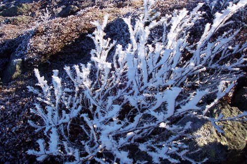 haor frost on Avery Peak