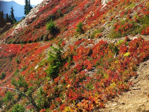 Mt. David Color