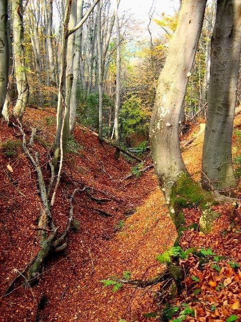 Autumn on the slope of Mount Zabia