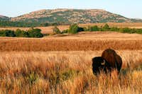 Bison and Elk Mountain