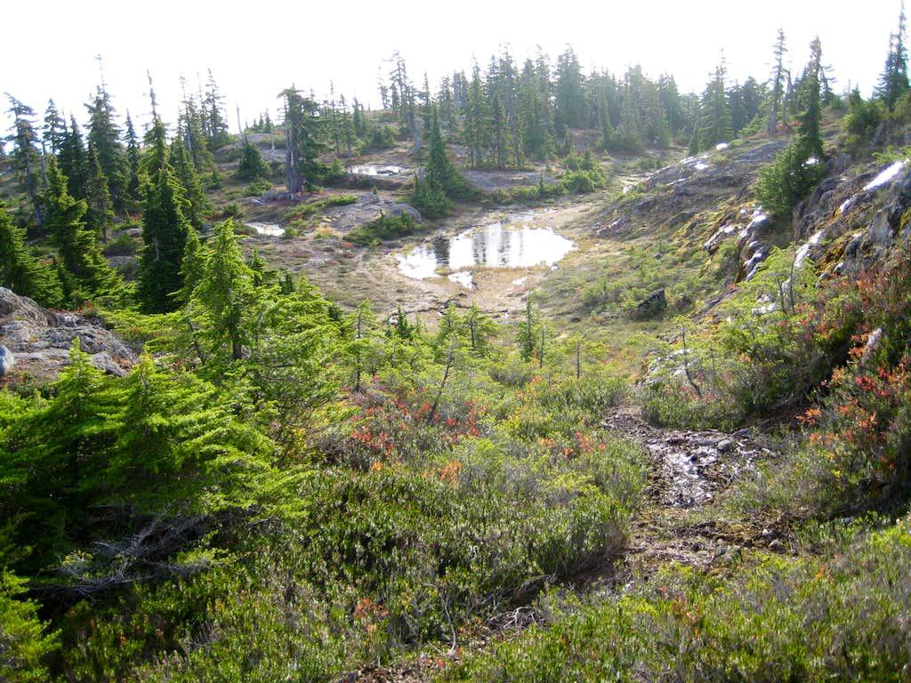Mt Drabble Summit Plateau