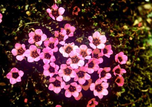 Familiar Flora