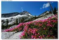 Mountain Heather with Canyon Peak