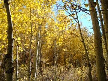 McGee Creek3