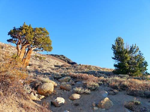 Juniper   trailhead