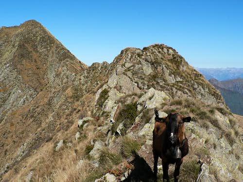 friend on the ridge...