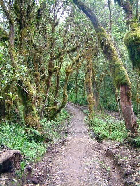 The cloud forest at the...