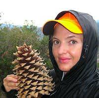 Picturesque Pine Cone