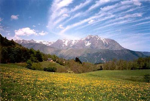 Flowers in the Pyrenees & the Arbizon
