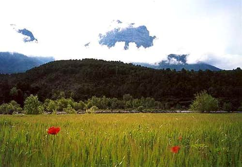 Poppies in the Pyrenees