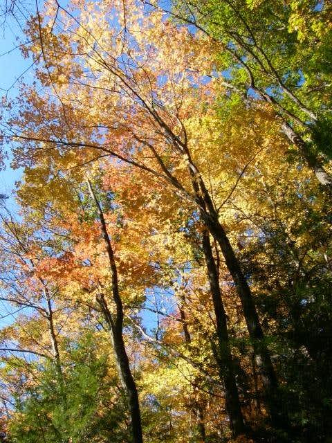 Rainbow of Fall Colors