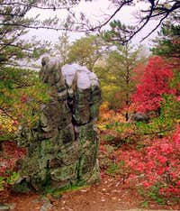 Buzzard Rocks
