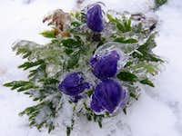 Frozen (Piatra Craiului)