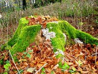 Autumn Decoration of Stump
