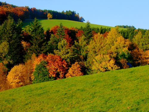Autumn scene at the Rothaarsteig near Großer Kopf (753m)