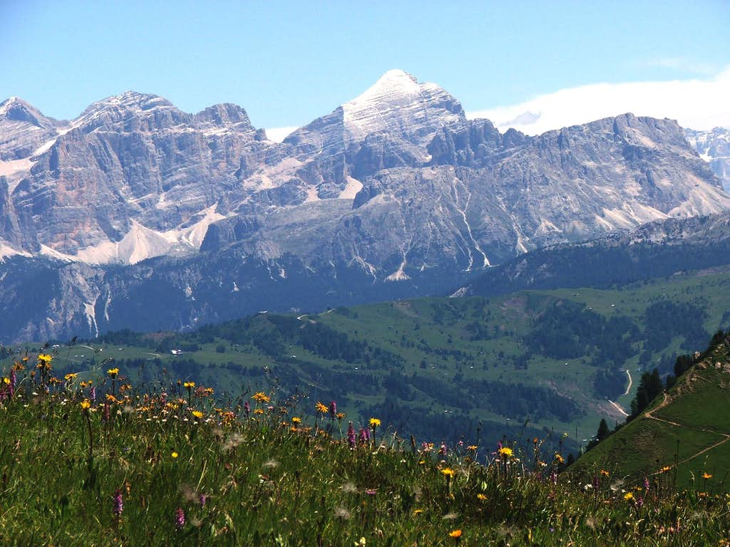 Flower Meadow and Tofana di Rozes