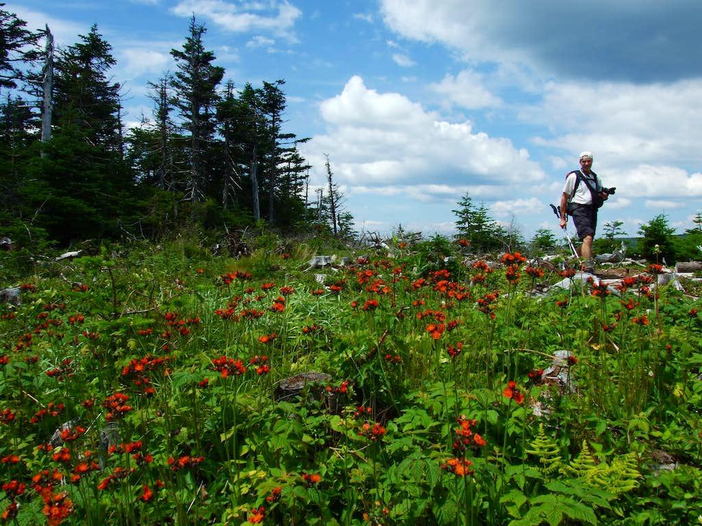 Wildflowers On Redington