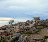 Mt. Baldy - Uinta Mountains