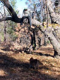 California Tree Climbing Dog