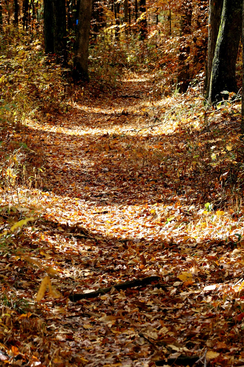 Sal Hollow Trail in Fall