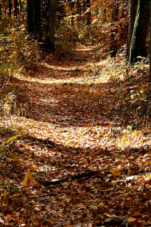 Sal Hollow Trail in Fall
