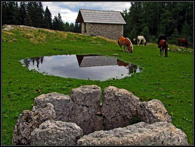 On Klek pasture