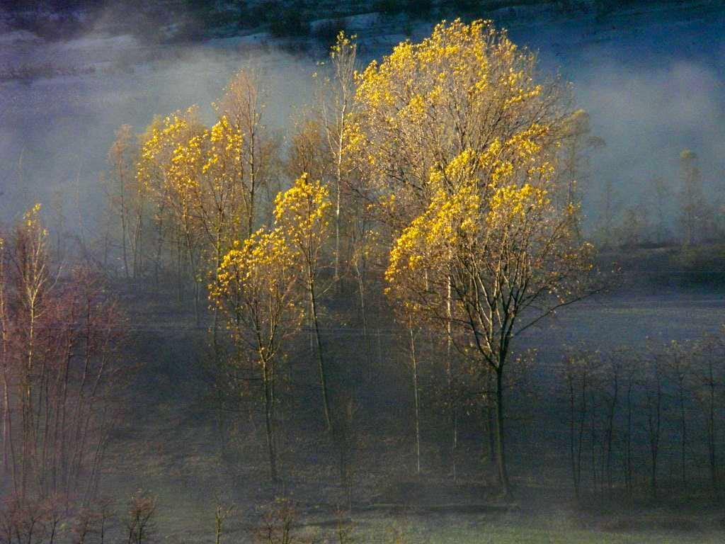 Fall over the fog...